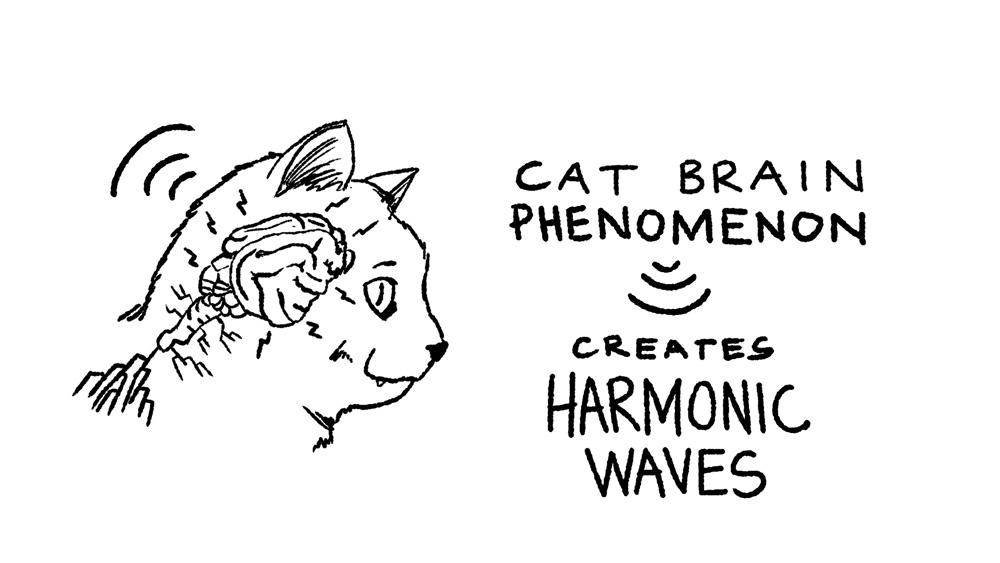 16 - cat brain to harmonic waves